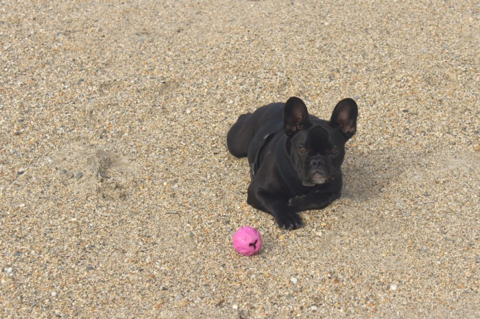 Pepper with her ball