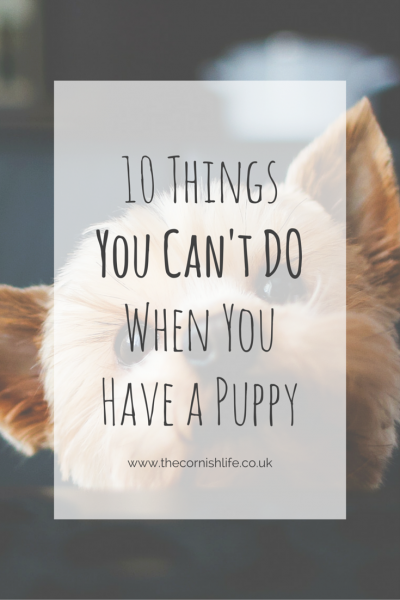 10 Things You Can't Do When You Have a Puppy