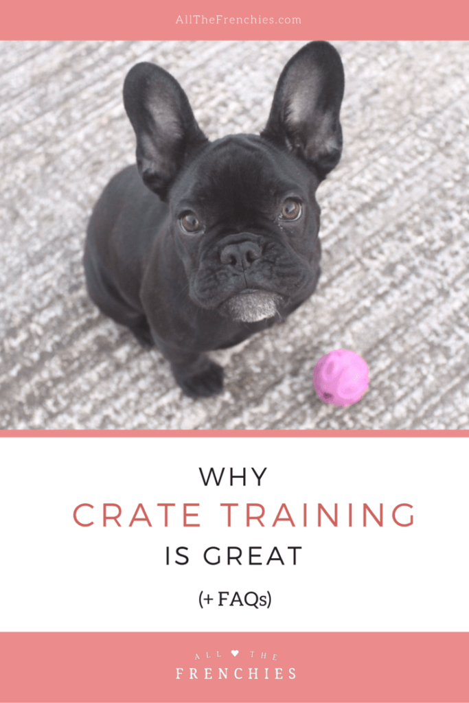 All the Frenchies - French Bulldog Blog