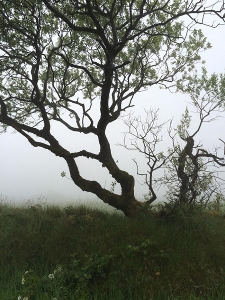 Pesky fog in Wales