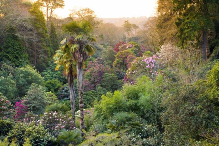 Trebah Gardens - Dog friendly places in Cornwall