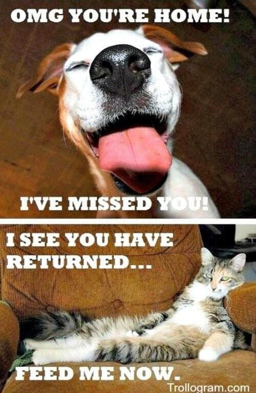 Difference Between People Who Like Cats And Dogs