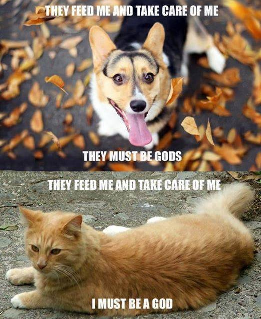 Cats v Dogs - which to get?