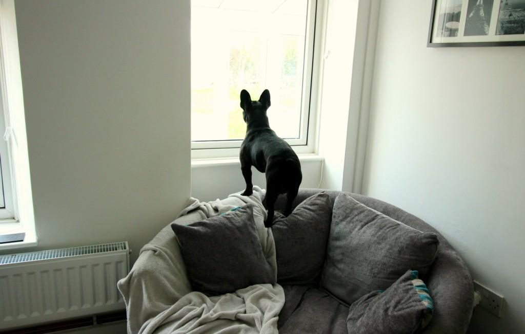 Pepper on the dream chair