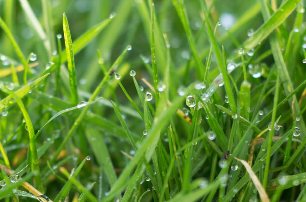 Rain in Cornwall