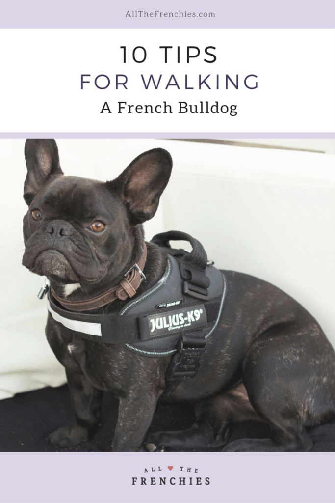 Frenchie gets all her holes filled