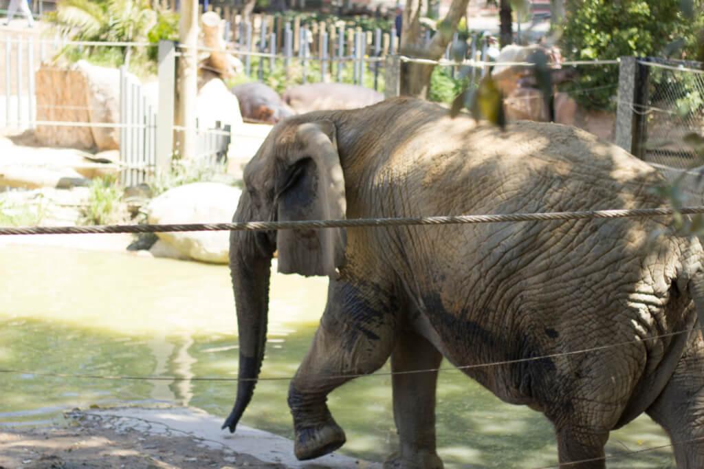 Barcelona Zoo in Spring