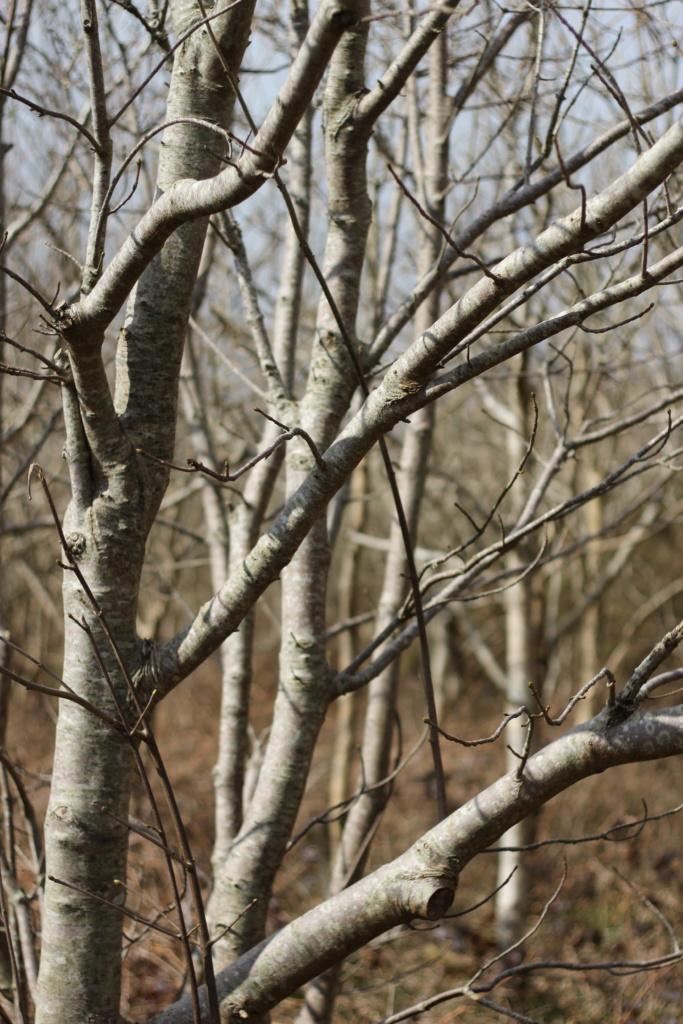 Tehidy Woods