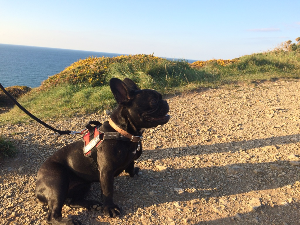 Pepper at Wheal Coates - Favourite Dog Walk in Cornwall