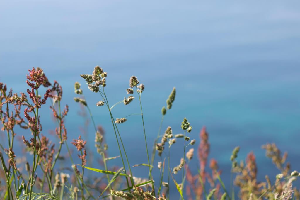 Portreath cliffs in Cornwall