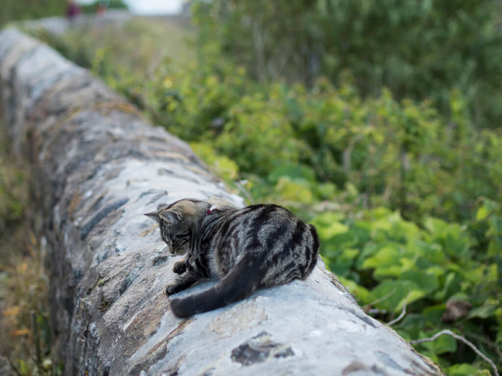 Kitten at Coverack