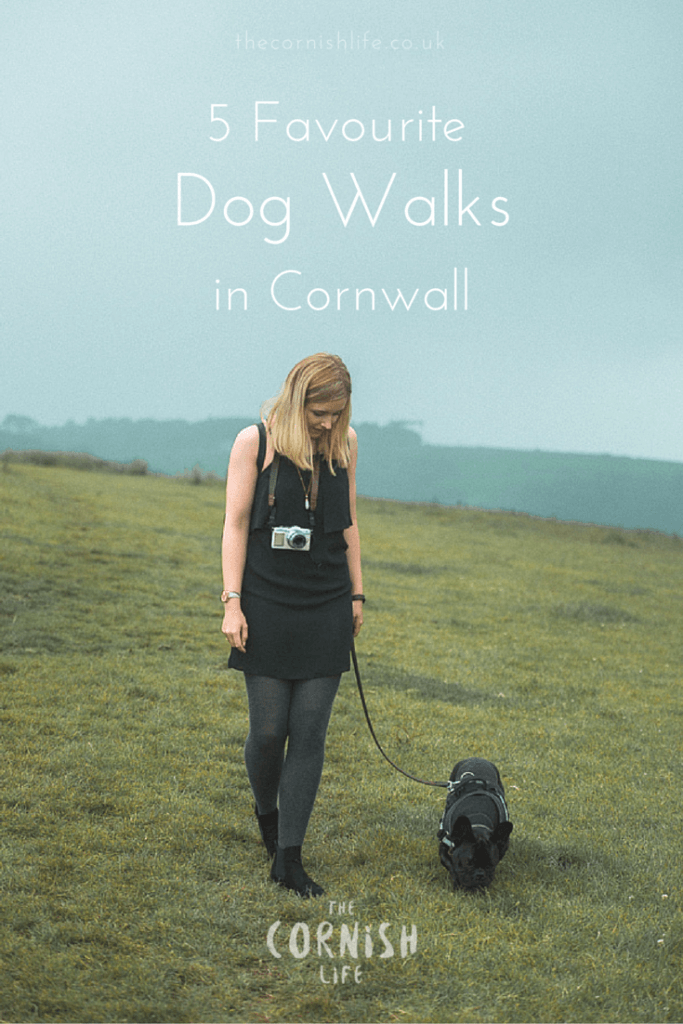 5 Favourite Dog Walks in Cornwall