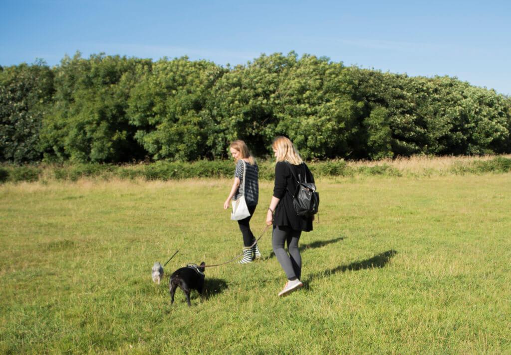 A Dog Walk at Tehidy Woods
