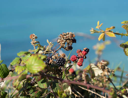 Things to do in Cornwall in Autumn (What's on Cornwall Autumn 2016)