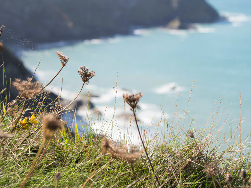 Portreath cliffs