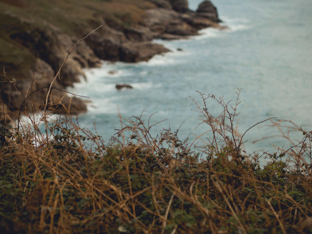 Wild walk on Rinsey, Cornwall