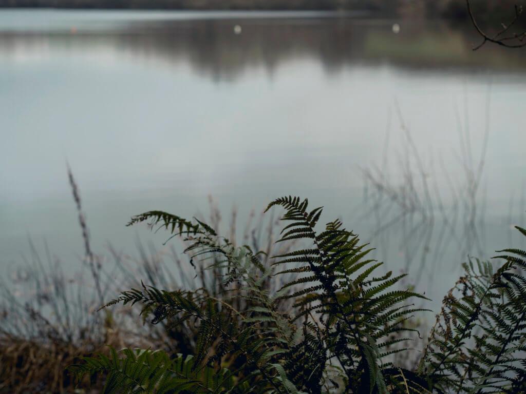 Argal Lake in Winter