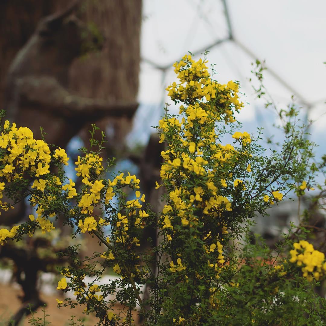 Beautiful Mediterranean flowers at the edenprojectcornwall
