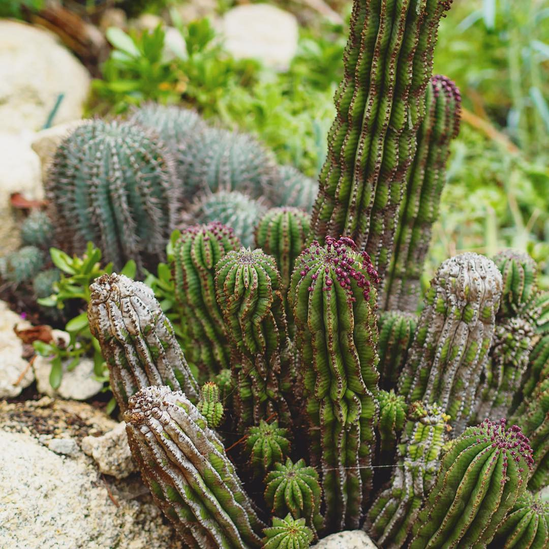 Gotta love a cactus or three edenprojectcornwall edenproject welcometoengland