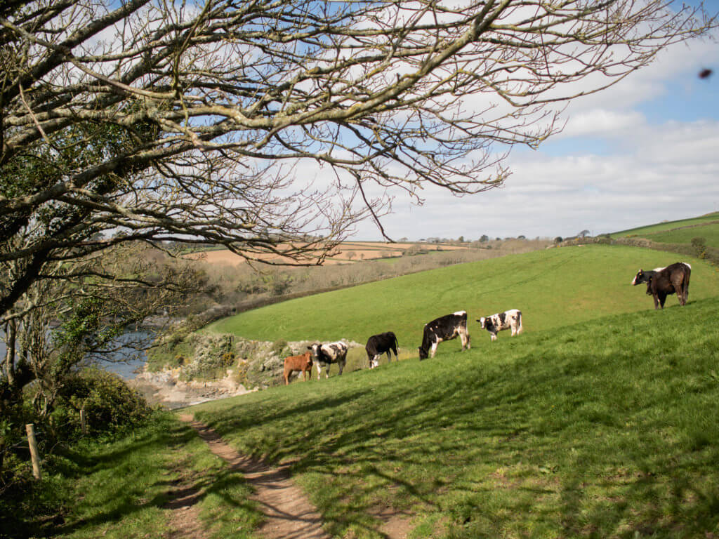 Mawnan, Near Falmouth