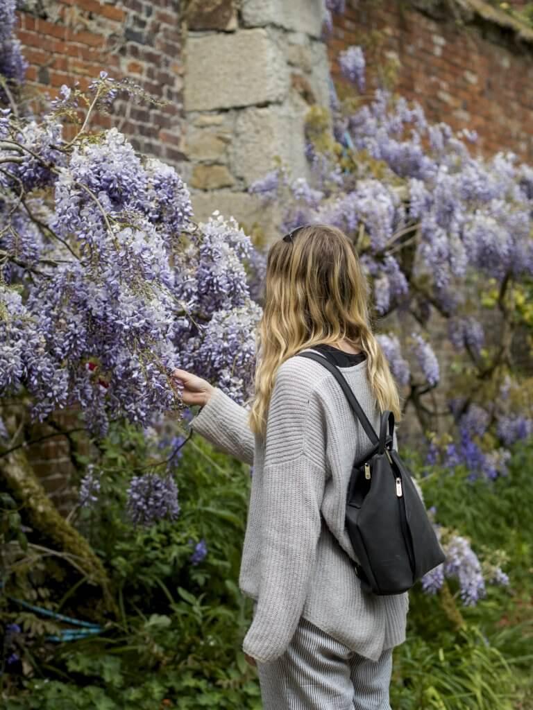 Bluebells at Enys Gardens