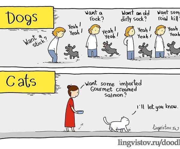 Should you get a cat or a dog?