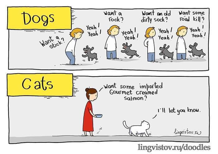 Cats vs dogs - which one should you get?