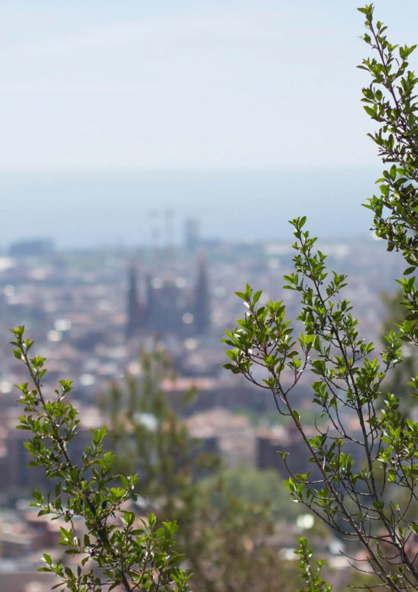Reasons to Visit Barcelona in Spring