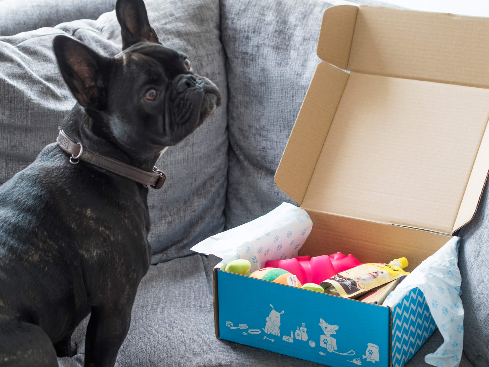 Post for Pepper (Pawsome Box Review)