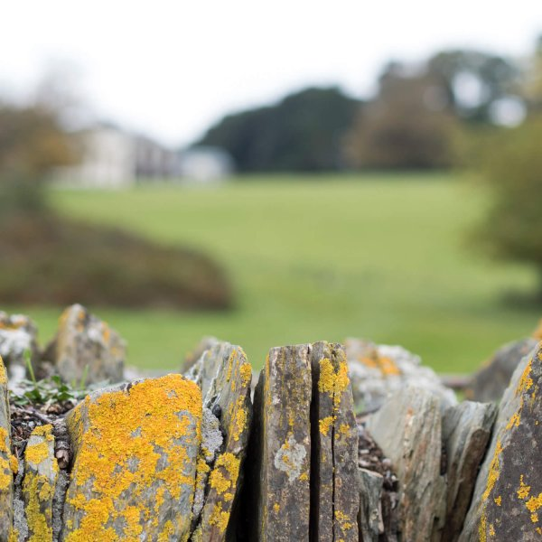 Friday Favourites (National Trust, Trelissick Gardens)