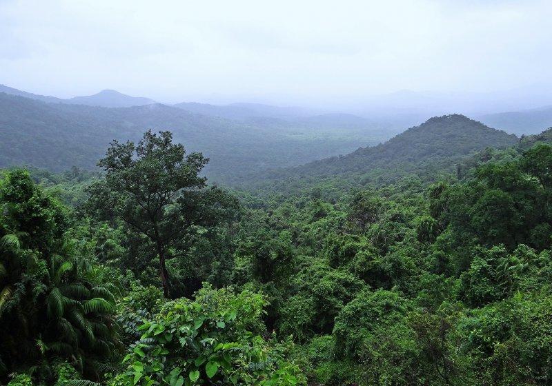 Rainforest Palm Oil