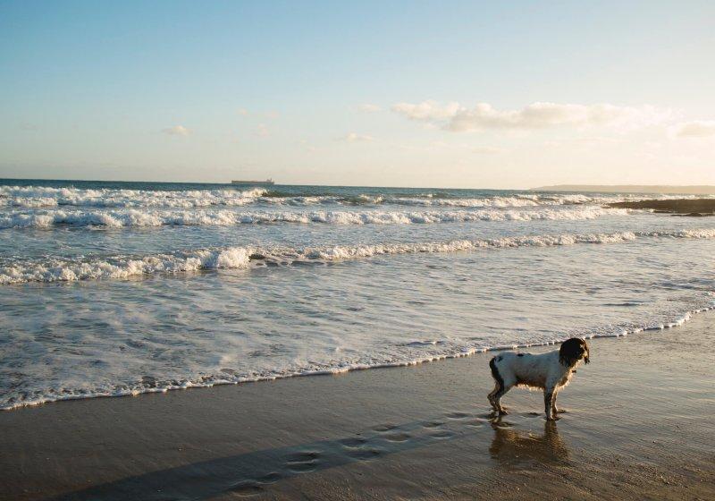 Gyllingvase Beach in Falmouth