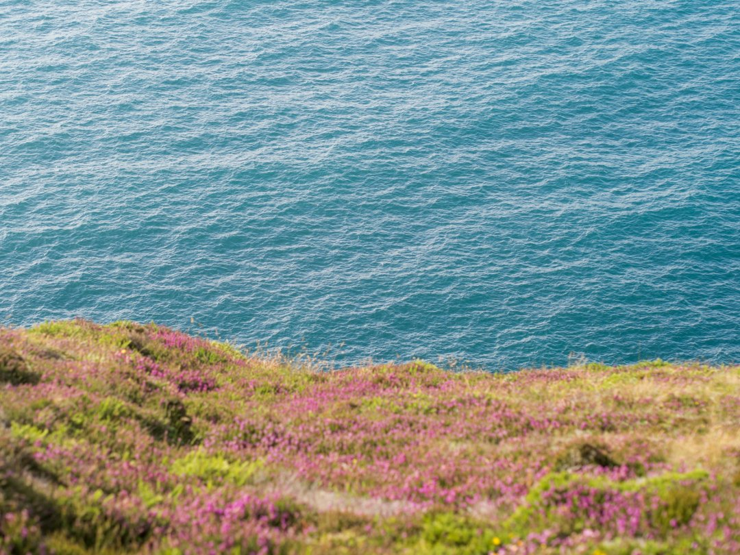 Summer on St Agnes head