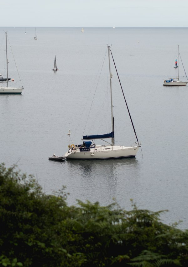 Peace & Quiet During Peak Summer (Helford Walks)