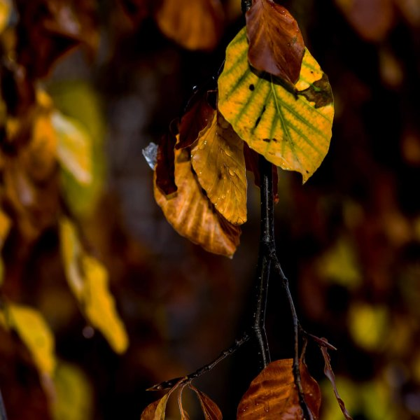 Autumn leaves Ricardo Almeida ©