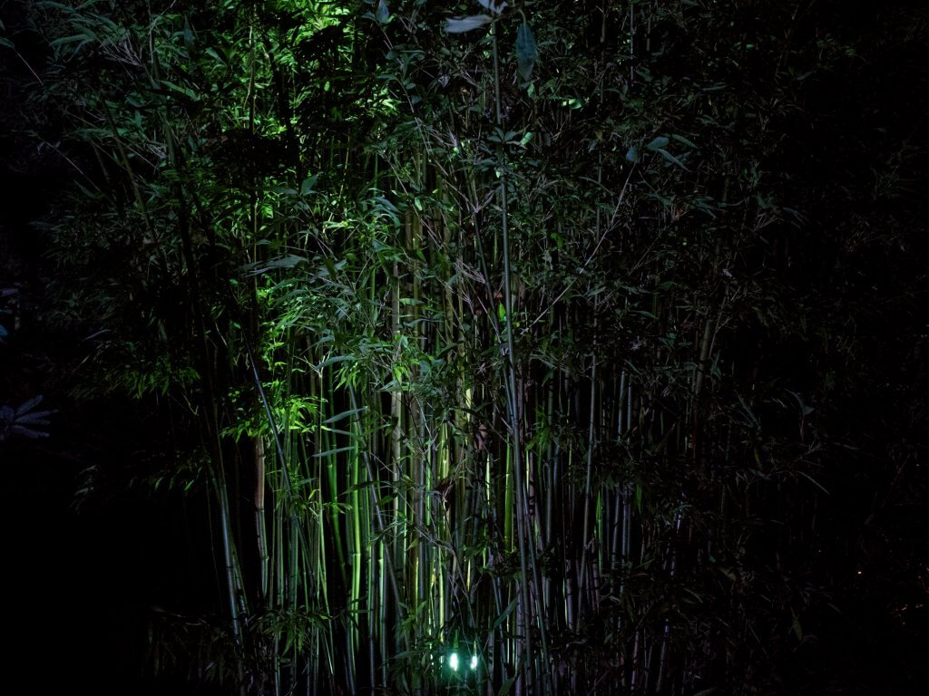 Trelissick Illuminated