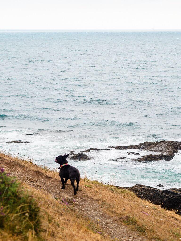 Nansidwell beach near Falmouth, Cornwall