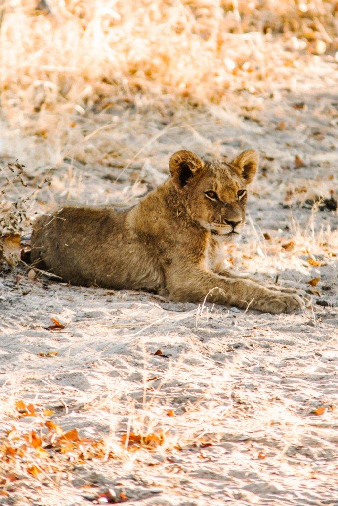 https://www.oliviabossert.com/blog/african-adventure-safari-review