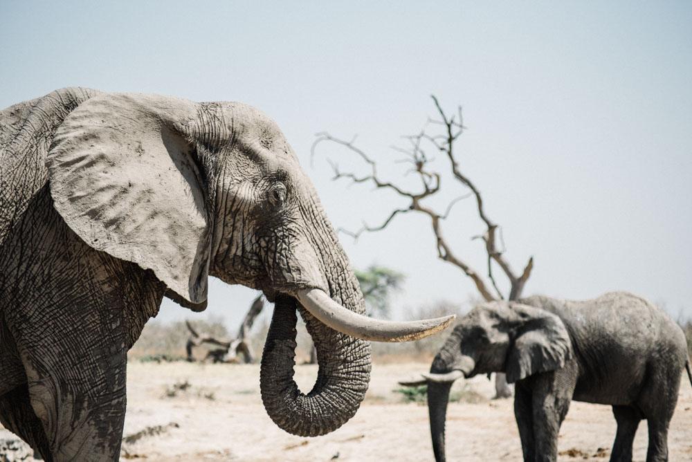 African safari by Olivia Bossert