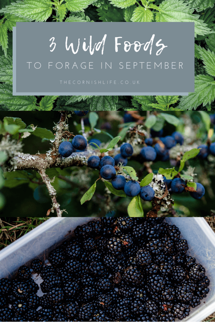 3 Wild Foods to Forage in September in the UK