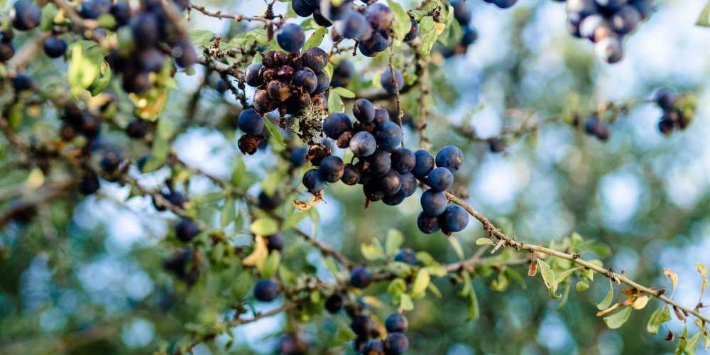 3 wild foods to forage in Autumn UK