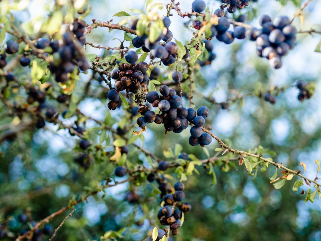 3 wild foods to forage in Autumn UK