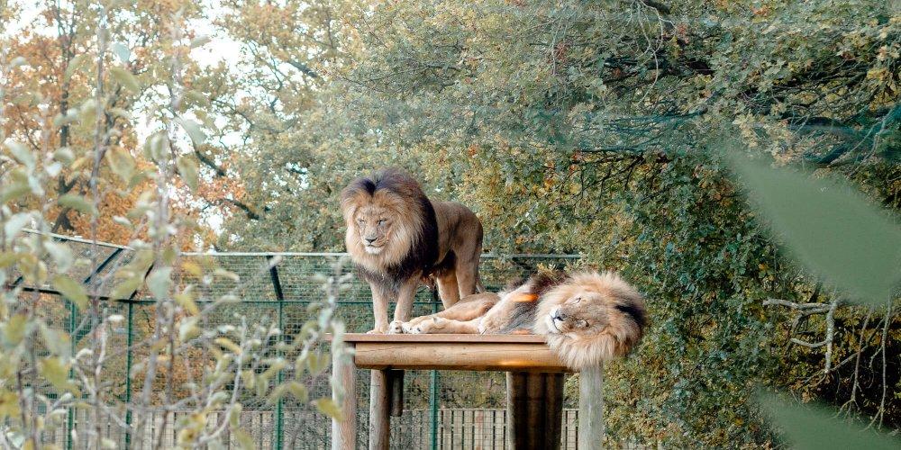 The Big Cat Sanctuary Review