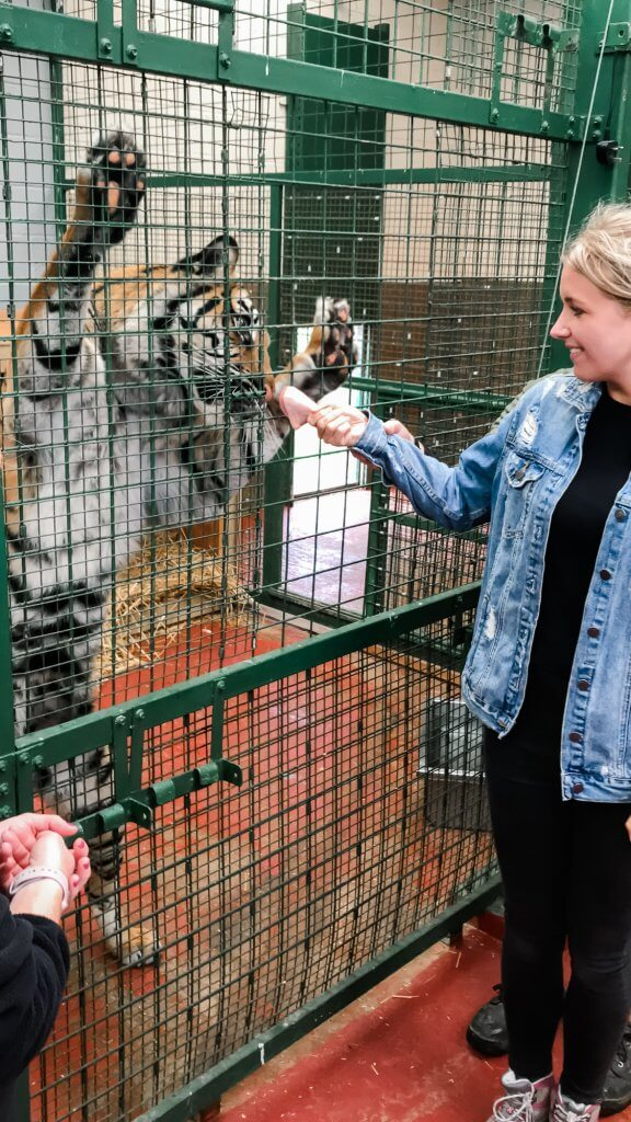 The Big Cat Sanctuary Review