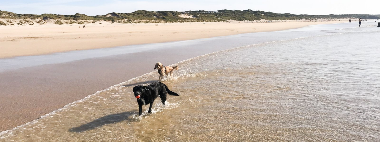 Have your say about dogs on Cornish beaches!