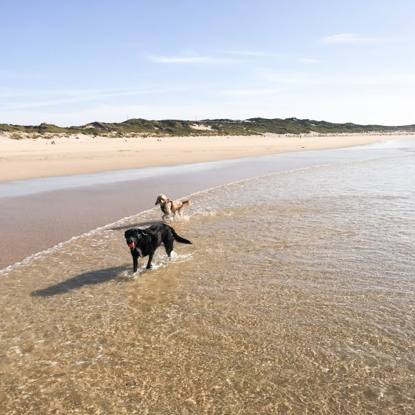Have your say on the dog beach bans in Cornwall!