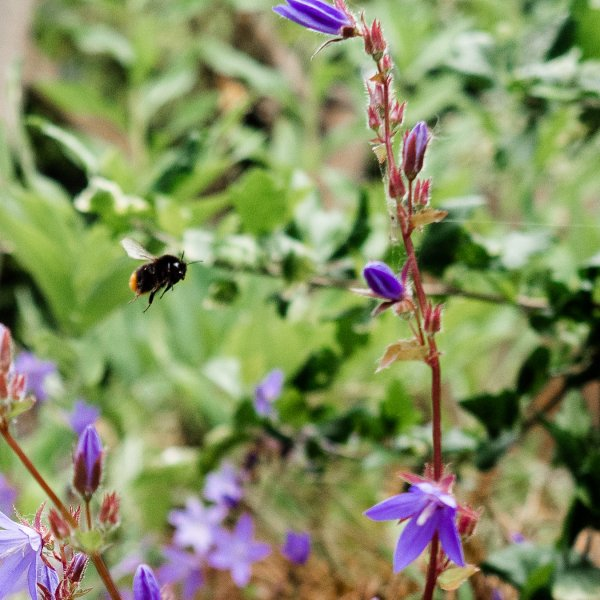 Why we need to care about bees