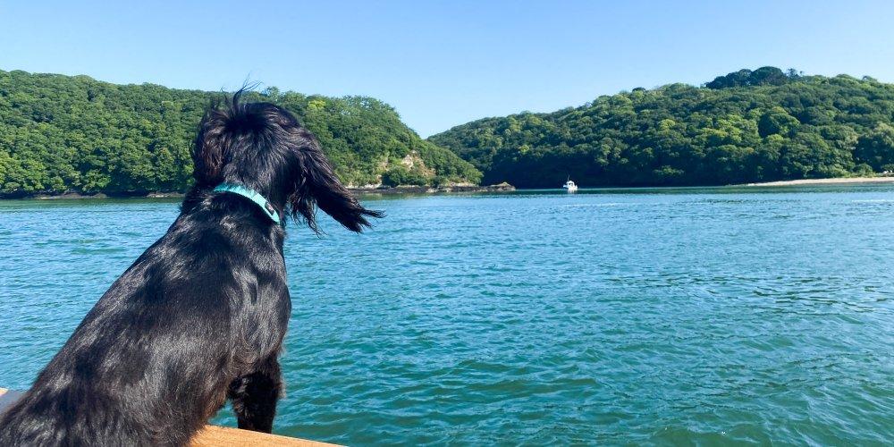 Exploring Truro River