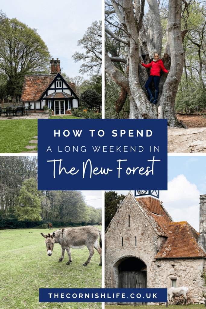 How to spend a long weekend in the New Forest