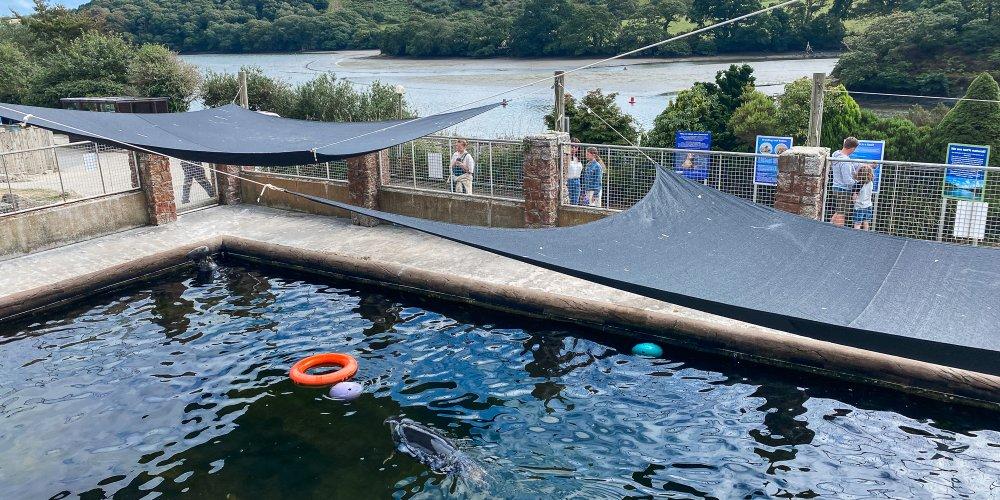The Cornish Seal Sanctuary